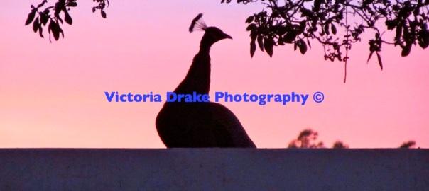 Victoria Drake Photography